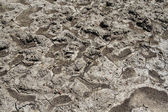 View cracked parched ground — Stock Photo