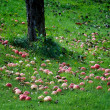 Autumn. Apples. Red apples on green grass, Apples on a ground under the apple tree, fragment, Red and yellow apples on grass. Autumn at the rural garden. Autumn background. Fresh fruits — Stock Photo