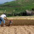 Stok fotoğraf: One unknown mworking in field on spring time, selective focus, noisy, spring background, farmer in field on spring, farmland and working man, seasonal works