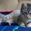 Portrait of elegant grey cat, young cat in blur dark dirty background, cat portrait close up, animals, domestic cat, cat with green eyes, grey cat,cat resting,selective focus to the face, uneven light — Stock Photo #38469303