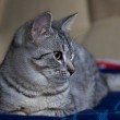 Portrait of elegant grey cat, young cat in blur dark dirty background, cat portrait close up, animals, domestic cat, cat with green eyes, grey cat, low ISO photo, selective focus to eyes — Stock Photo #38570531