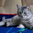 Portrait of elegant grey cat, young cat in blur dark dirty background, cat portrait close up, animals, domestic cat, cat with green eyes, grey cat, low ISO photo, selective focus to eyes — Stock Photo #38570537