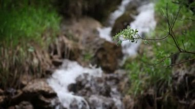 Small stream in the forest — Vídeo Stock