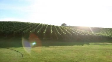 Shot of driving through the wineyard and golf course with special sun reflection — Stock Video