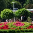 Shot of a couple walking in park — Vídeo de stock