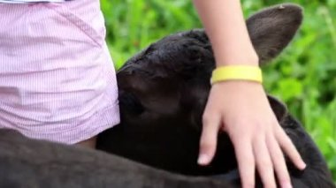 Close up of a girl's hand caressing small black calf — Wideo stockowe