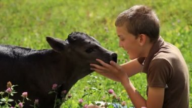 A young boy petting a small calf on a meadow — Stock Video