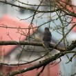 Shot of bird sitting on tree branch and looking around — Stock Video