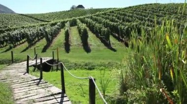 Beautiful landscape of the golf court in the middle of the wineyard — Stock Video