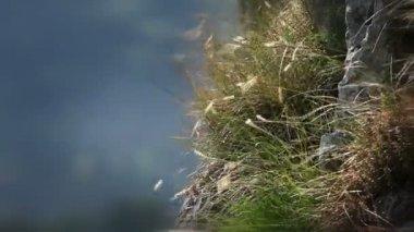 Colpo d'erba soffiata dal vento — Video Stock