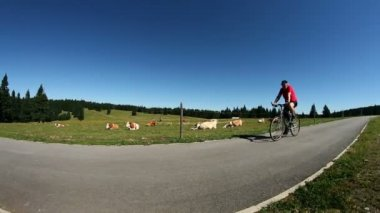 Man cycling on a tableland near cows — Stock Video