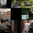 Different animals in Ljubljana zoo — Stock Video