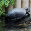 Stock Video: Turtle resting