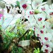 White orchid — Stock Video
