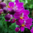 Purple orchid — Stock Video