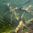Shoal of fishes swimming — Stock Video #28389159