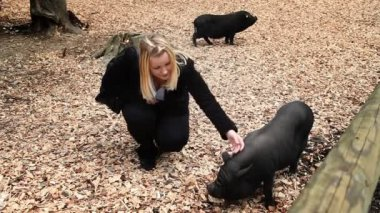 Wild pig in zoo, woman si visiting — Stock Video
