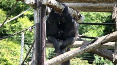 два monkies сидели и обниматься — Стоковое видео