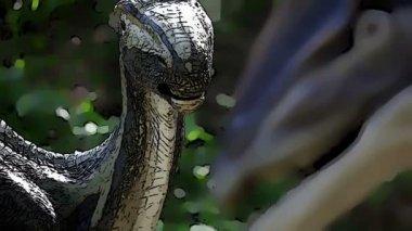 恐龙与更改焦点的动画效果 — 图库视频影像