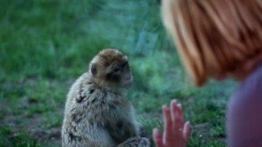 女人看着猴子通过一个窗口 — 图库视频影像