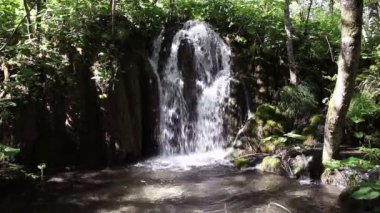 Small waterfall in the forest — Wideo stockowe
