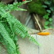 Stock Video: Butterfly eating orange