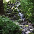 Shot of rapids in woods — Stock Video #28398613