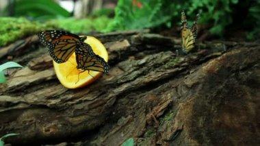 多彩扇动 eatinf 橙色水果 — 图库视频影像