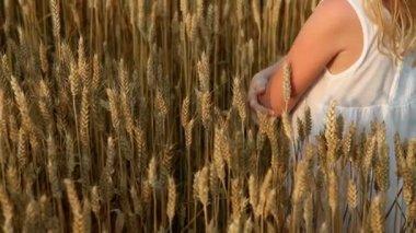 Little girl walking on golden field — Stock Video