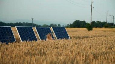 Paneles solares en un campo con una niña corriendo — Vídeo de stock