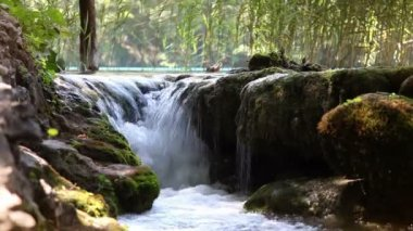 National park Plitvice-Croatia — Stock Video