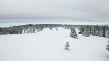 Idyllic ski slope and forest on cloudy day — Stock Video