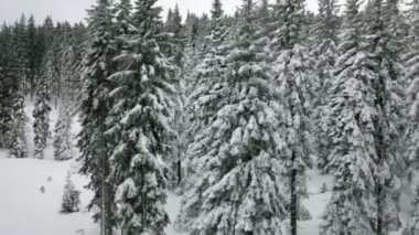 Idyllic ski slope and snowy spruce tree forest — Stock Video