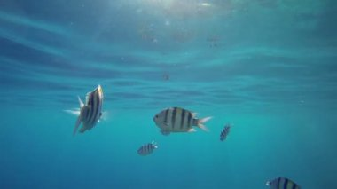 Fishes under the blue sea level — Stock Video
