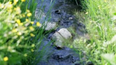 Water stream in spring — Stock Video