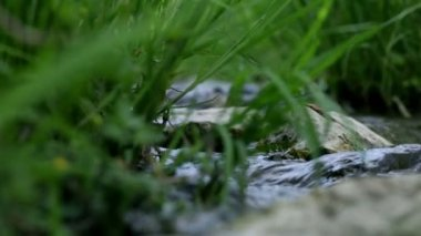 Low angle close up of grass and rocks in water stream — Stock Video