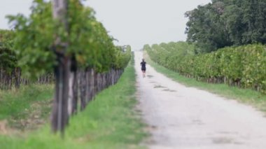 Macadam path with runner between two fields of grapevines — Stock Video