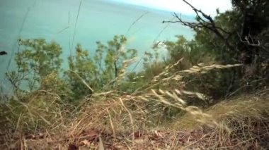 Tuft of grass and green bushes at the sea shore — Vídeo de Stock