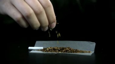 Spreading tobacco across the rolling paper with filter — Stock Video