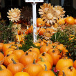 Pumpkins with Birdhouse and Sunflowers — Stock Photo #27173941