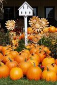 Pumpkins with Birdhouse and Sunflowers — Stock Photo