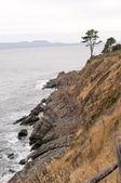 Magelhaense kust en eenzame boom — Stockfoto