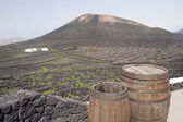 Vineyard on volcanic mountains, Lanzarote — Stock Photo