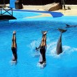 Attraction with dolphins — Stockfoto
