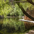Beatiful reflection of a tree in a lake, Monasterio de Piedra, S — Stok fotoğraf