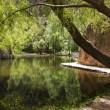 Beatiful reflection of a tree in a lake, Monasterio de Piedra, S — Foto de Stock