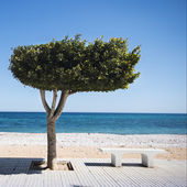 Bench under tree on sunny beach in Altea, Spain — Stock Photo