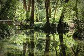 Reflejo de los árboles en el parque natural en españa — Foto de Stock