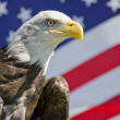 American Eagle — Stock Photo