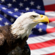 American Eagle — Stock Photo #27526445